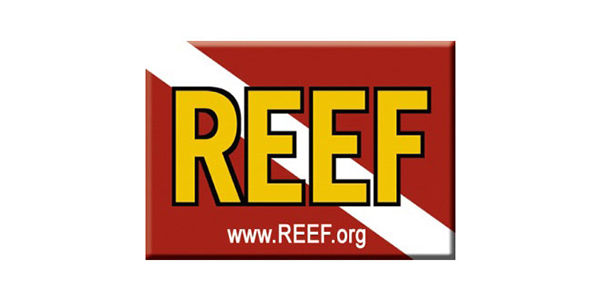 REEF on Wetpixel