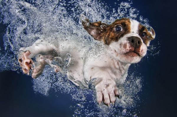 подводная съемка собак