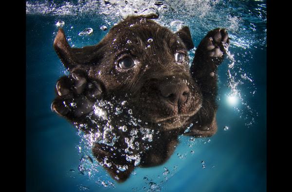 подводная съемка щенков