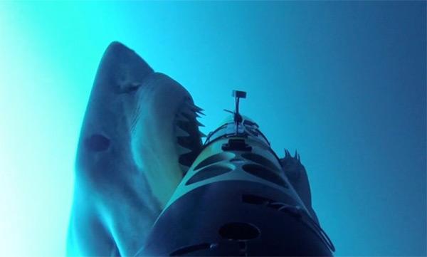 подводная съемка больших белых акул