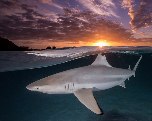 Sharky Sunset on Wetpixel
