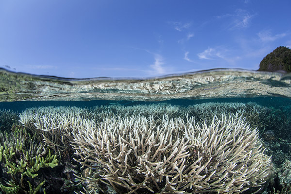 Coral bleaching on Wetpixel