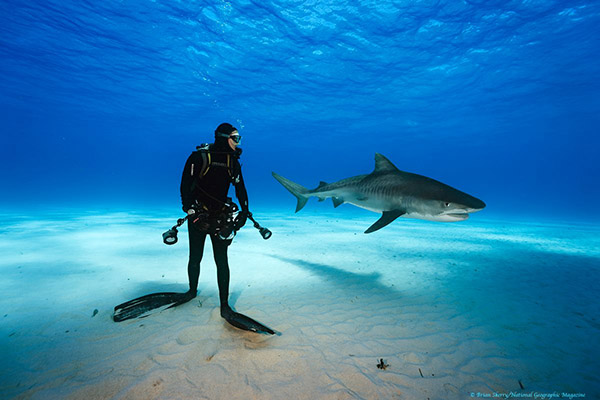 Brian Skerry on Wetpixel