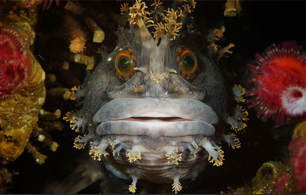 Абсолютным победителем стал Одри Шпатак с подводным снимком, сделанным в водах Японии