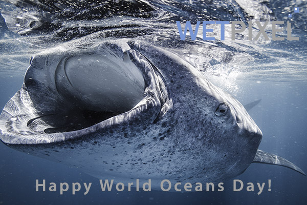 World Oceans Day on Wetpixel