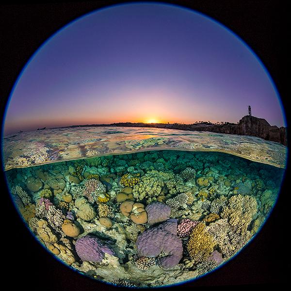 10 Photos 15 Reviews: Review: Nikon 8-15 Mm F/3.5-4.5 Fisheye Lens :: Wetpixel.com