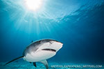 Wetpixel Bahamas Sharks Expeditions