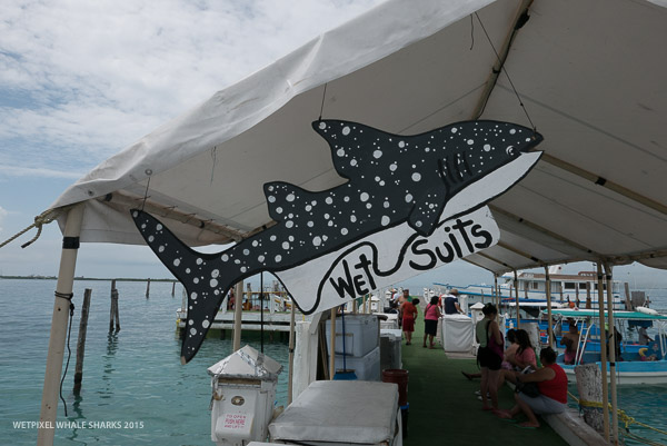 a report on whale sharks A summary of the cabo trek first whale shark season snorkeling with whale sharks in la paz starting from october till march every year.